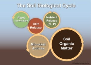 The integrated biological soil cycle shows how much fertile soil relies on microbial activity