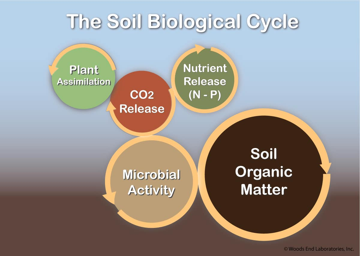 Microbial activity in the soil