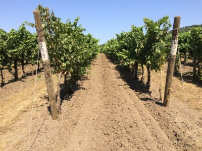 Soil Health and Deep Plowing Under The Tuscan Sun