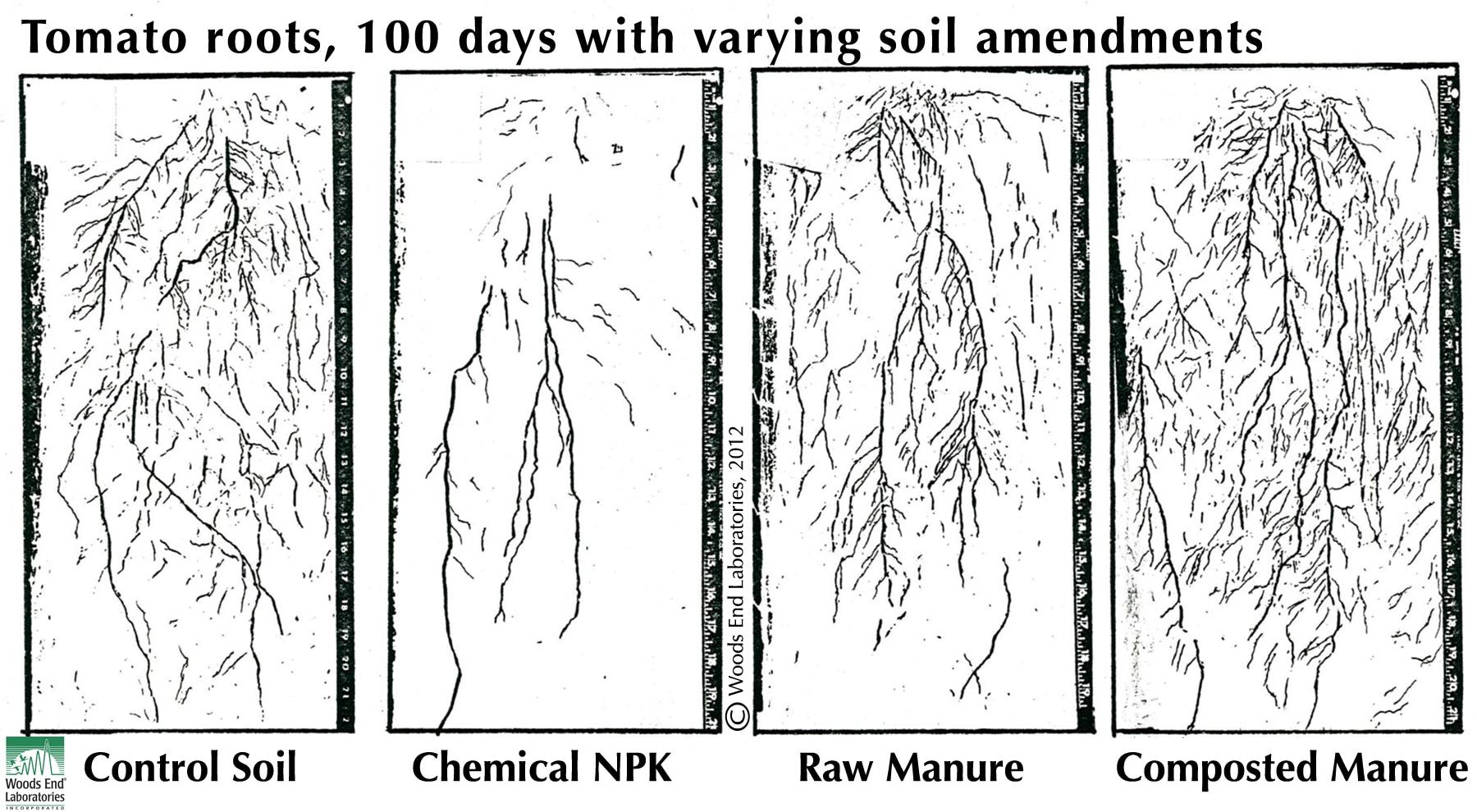 Soil Health: Amendments affect Whole Plant Morphology, Not just Yield