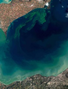 A NOAA Captured image of Lake Erie in 2011 shows the massive algal blooms from nutrient loads