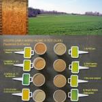 solvita labile amino nitrogen test SLAN
