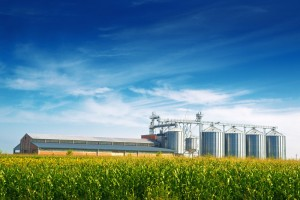 Storage grain silos loom over corn field
