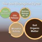 soil-biological-cycle