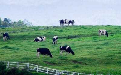 Solvita Scores High against Infrared Methodologies in New England Dairy Soils